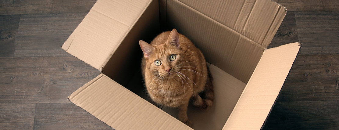 How to move house with a pet